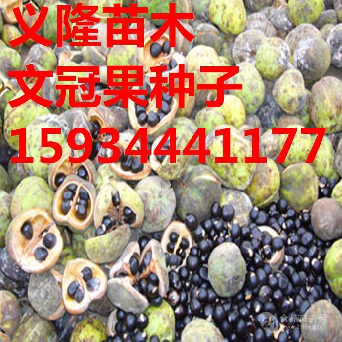 文冠果种子多少钱一斤
