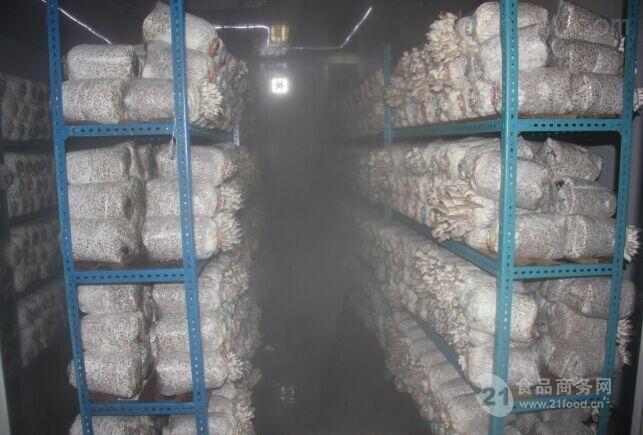 食用菌大雾量加湿机器