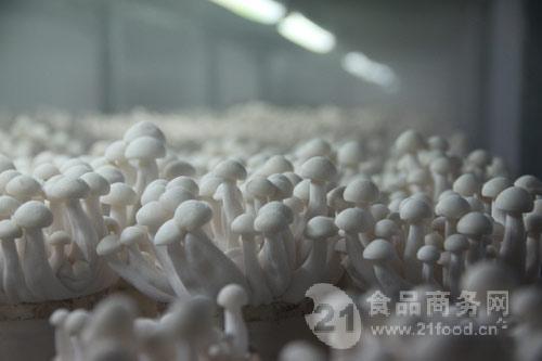 大棚种植食用菌加湿器