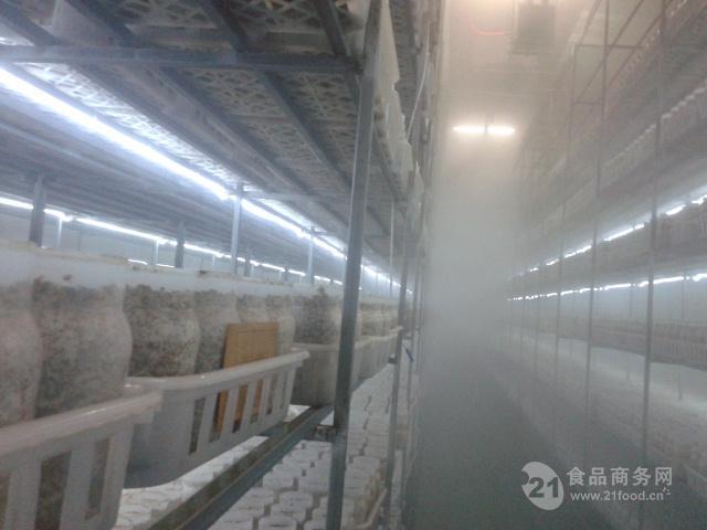 超声波食用菌加湿器