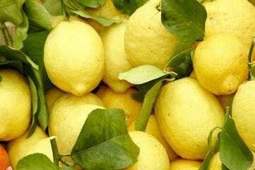 安岳柠檬价格种植批发年中特惠