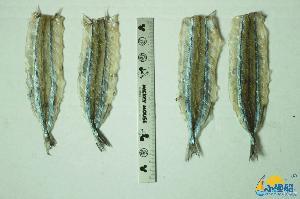 馬步魚干片13-15cm 小漁船 燒烤 針魚片山東特產廠家直銷