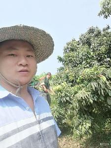 四川泸州合江荔枝5斤原产地发货