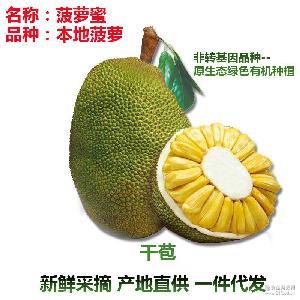 泰国本地菠萝蜜广东产地直供一件代发新鲜采摘全国配送优质货源