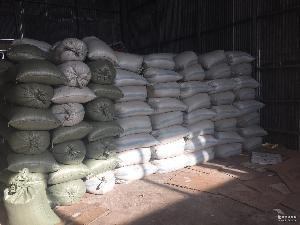 長年大量批發松子開口松子原料松籽