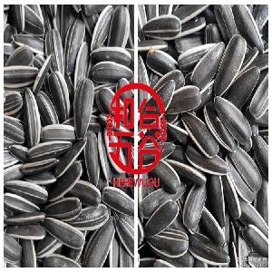 内蒙古优质产品 原产地直销 2016新品363精品生葵花籽