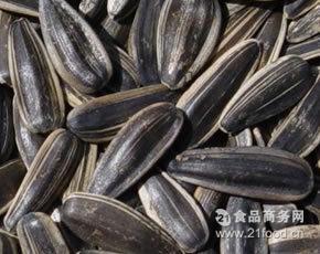 供应优良适合加工高档葵花籽的新产品363