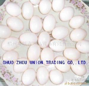 供应鸽蛋及乳鸽 营养食品 禽蛋 鸽食 鸽子蛋 pigeon 鸡蛋