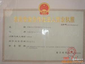 高質量  糖炒 京東板栗 l供應高品質 保證質量