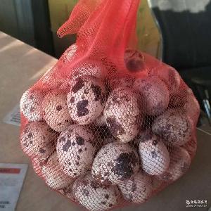 宝宝营养辅食鹌鹑蛋 新鲜散装无污染农家散养 鲜鹌鹑蛋 产地直销