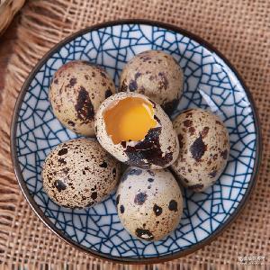 农家散养新鲜生鹌鹑蛋 孕产妇宝宝辅食 鸟蛋 鹌鹑蛋