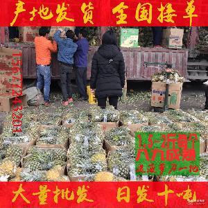 廣西海南大菠蘿鳳梨新鮮熱帶水果海南菠蘿批發鳳梨一件代發招代理