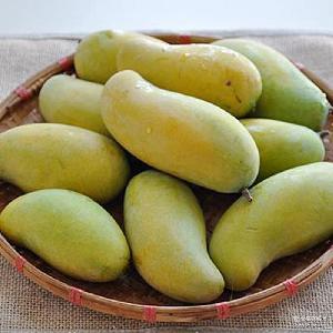 新鲜芒果金百花芒果 【PC】四川攀枝花特产水果 10斤装一件代发