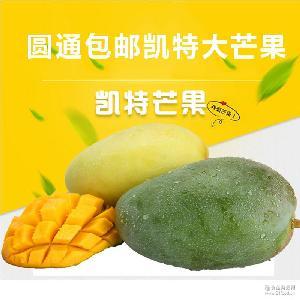 批发四川攀枝花特色生鲜水果凯特大芒果现摘现发新鲜芒果5斤装包