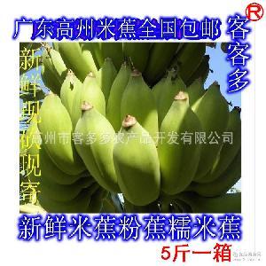 廣東高州水果之鄉現砍新鮮米蕉粉蕉糯米蕉香蕉無催熟劑包郵