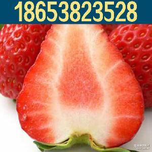 香甜可口红颜奶油草莓 绿色种植礼盒包装草莓果