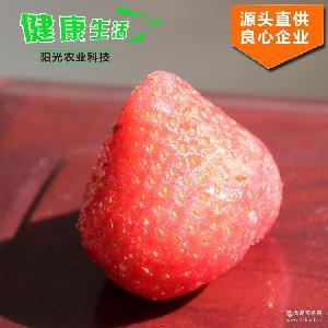歡迎來電咨詢 專業供應新鮮優質出口級別草莓