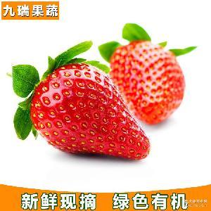 厂家直销新鲜草莓大果型草莓绿色有机水果 四季果蔬苗