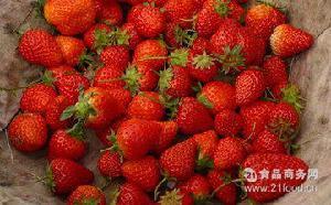 草莓 牛奶味