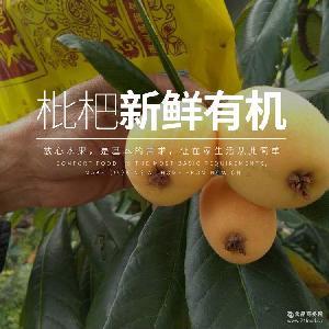量多價優 產地直銷 云霄富硒枇杷 新鮮綠色有機水果