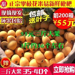 四川攀枝花米易枇杷新鮮水果枇杷果3斤大果鏈接