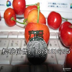 先鋒 煙臺大櫻桃 新鮮勝進口車厘子山東特產3斤包郵 齊櫻5月發貨