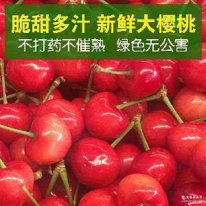 2016新鲜大樱桃车厘子 美早先锋黄蜜樱桃 脆甜多汁果肉厚实 供应
