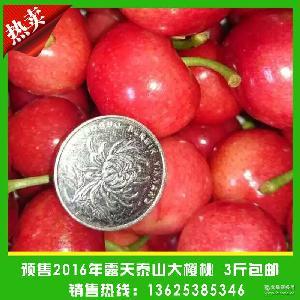 预售红灯新鲜大樱桃 农家自产现摘新鲜樱桃 纯正口感大樱桃
