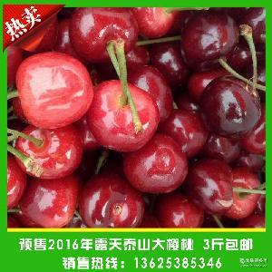 有机绿色红灯大樱桃 预售新鲜大樱桃 预售2016年露天泰山大樱桃
