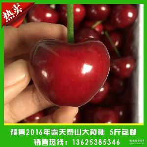 产地直销绿色新鲜大樱桃 预售新鲜樱桃 2016年露天泰山大樱桃
