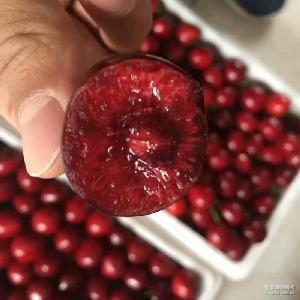 预售天然新鲜大樱桃 2016年露天泰山大樱桃 产地直销现摘大樱桃