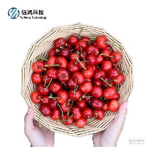 現摘現賣原產地直供汁多肉甜量大價優 大櫻桃車厘子5斤包郵