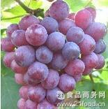 葡萄樹認養;新品種葡萄 抗衰老 紫瑪瑙:葡萄訂購 口感甜蜜