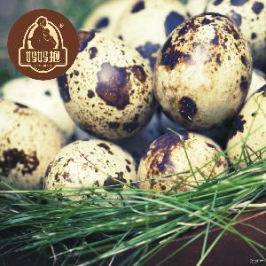 鲜蛋 厂家直供 火锅食材 餐饮批发零售 水煮蛋