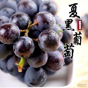 野藤葡萄 【预售】上虞夏黑葡萄无籽新鲜时令水果4斤装