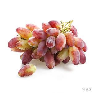 果园现摘现发新鲜美人指葡萄 批发 预售新鲜水果 甘甜多汁5斤装