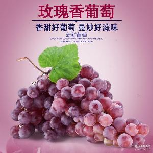 玫瑰香葡萄批发新鲜葡萄礼盒装4斤/盒 四川省内顺丰包邮