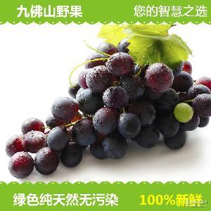 现摘现发 生鲜水果采摘无污染种植 新鲜葡萄水果 原产地直销