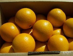 新鲜水果代理柳丁橙鸡蛋橙甜橙子大果 批发柳丁橙