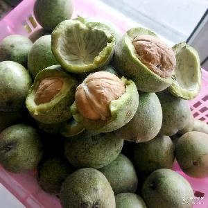 新2生核桃 青皮核桃口感香脆 新鲜上市 2017年新疆青皮核桃185