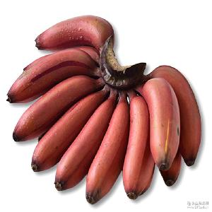 1件代發 5斤包郵福建漳州紅皮香蕉美人蕉新鮮孕婦水果火龍蕉香蕉