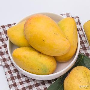 一件代发 新鲜芒果5斤装 全国包邮 台农芒果水果批发代理
