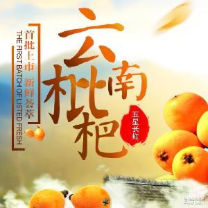云南特产蒙自新鲜水果长虹五星特级甜如蜜枇杷3-5斤装批发