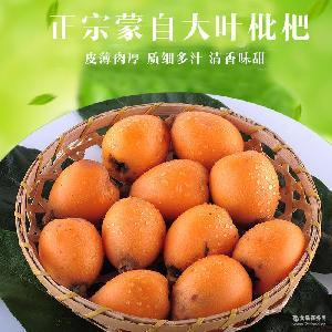 大葉子大紅袍蒙自枇杷3斤5斤裝批發 云南特產 新鮮水果大枇杷