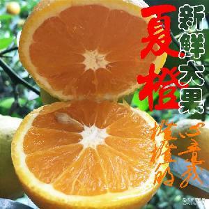 秭歸新鮮橙子現摘夏橙(大果)10斤包郵榨汁水果臍橙果園直發大量批