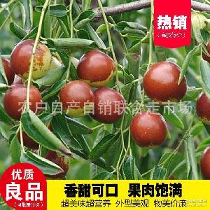 出售特级180沧州金丝小枣 专业生产原生态金丝小枣 长期供应