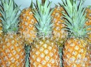 批發直銷 香甜多汁  上市水果 新鮮菠蘿 鳳梨