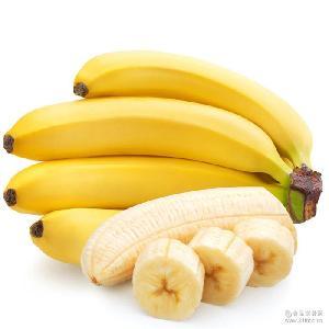 基地現采摘批發 廠家直銷香蕉 品質保證長期供應米蕉香蕉