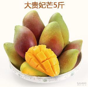 广西百色贵妃芒新鲜芒果水果 大贵妃红金龙芒果 5斤装包邮