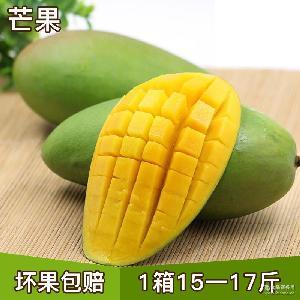 批发新鲜芒果小贵妃芒香甜多汁芒果 小青芒水果每箱15-17斤